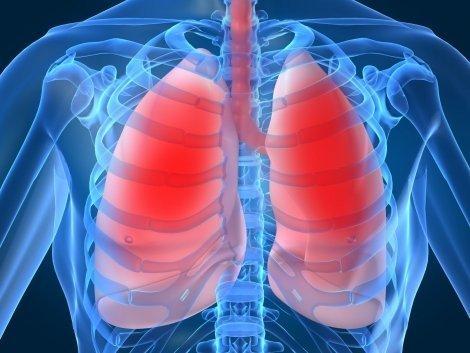 Human-Lung